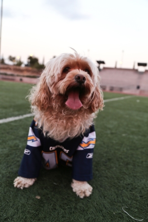 Chargers dog Molly